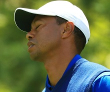 Tiger Frustrated