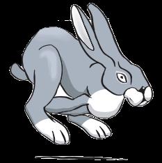 Jogging Hare Pic
