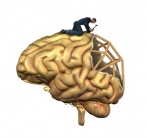 Brain Build